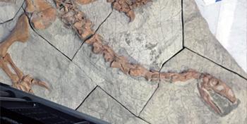 Plateosaurier: Der Dino unter den Dinos