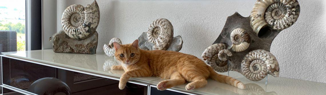 Ammoniten