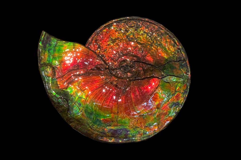 Traumhafter wunderschöner opalisierender bunter Ammonit, Ammolite genannt, aus Kanada, Breite 50cm